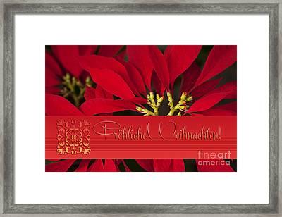 Froehliche Weihnachten - Poinsettia  - Euphorbia Pulcherrima Framed Print