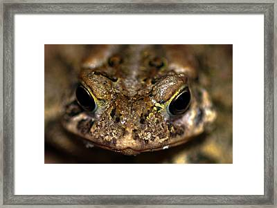 Frog 2 Framed Print by Optical Playground By MP Ray