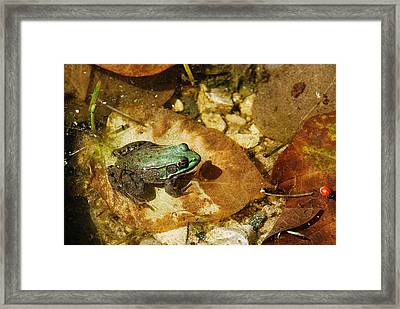 Frog And A Ladybug Framed Print by Janice Adomeit