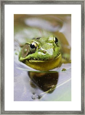 Frog And Fly Framed Print