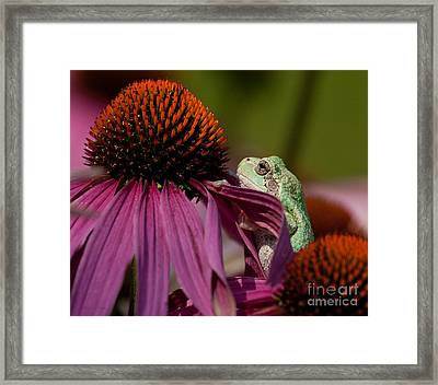 Frog And His Cone Framed Print