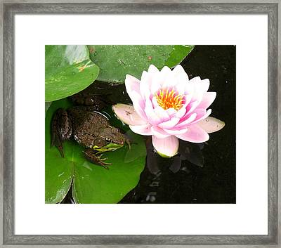 Frog And Lily Framed Print by Debbie Finley