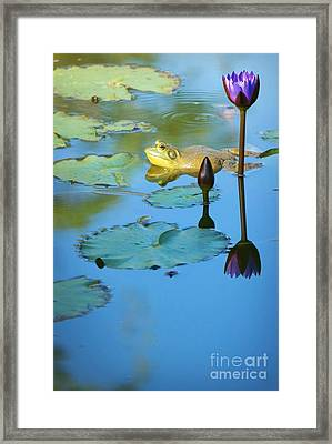 Framed Print featuring the photograph Frog And Lily by Ellen Cotton