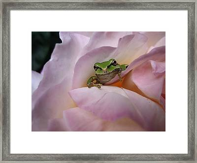 Frog And Rose Photo 1 Framed Print by Cheryl Hoyle