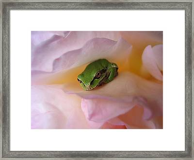 Frog And Rose Photo 2 Framed Print by Cheryl Hoyle