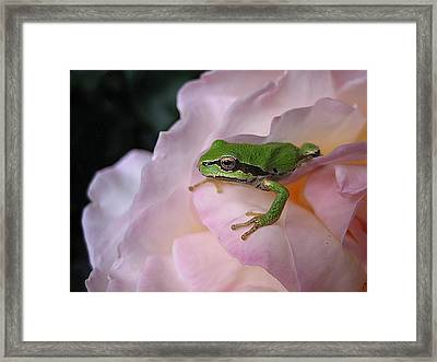 Frog And Rose Photo 3 Framed Print by Cheryl Hoyle
