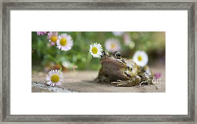 Frog And The Daisy  Framed Print by Tim Gainey