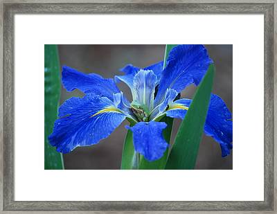 Framed Print featuring the photograph Frog At Rest by Kathy Gibbons