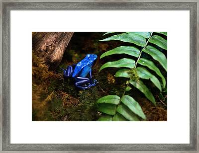 Frog Blues Framed Print