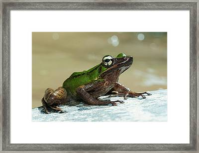 Frog By Stream In Malaysia Framed Print by Scubazoo