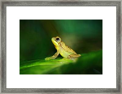 Frog Dreams Framed Print by Paul Slebodnick