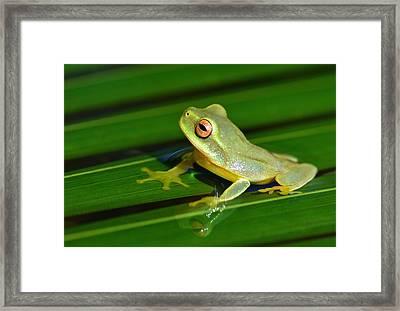 Frog Eye Reflection Framed Print
