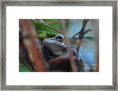 Frog Eye Tree Hidden Framed Print