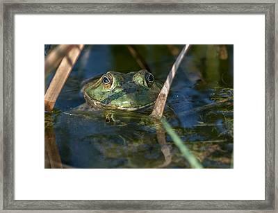 Frog Eyes Framed Print
