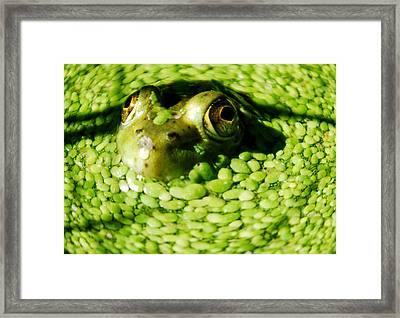 Frog Eye's Framed Print by Optical Playground By MP Ray