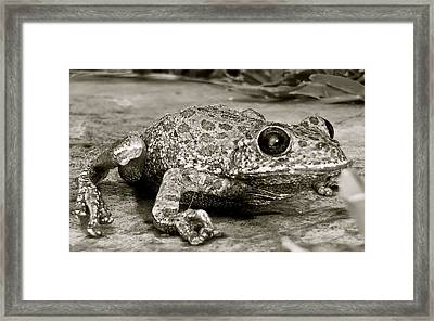 Frog Hair Framed Print