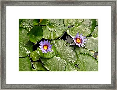 Frog Heaven Framed Print