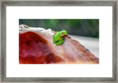 Framed Print featuring the photograph Frog In A Cockle by Rob Sellers