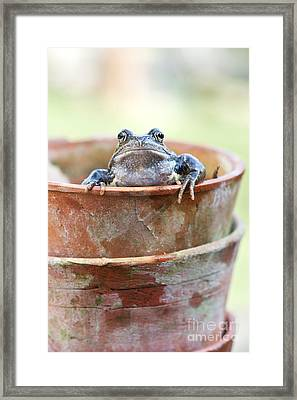 Frog In A Pot Framed Print by Tim Gainey