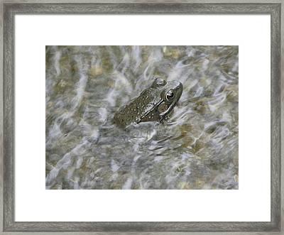 Frog In Rippling Water Framed Print by Cim Paddock