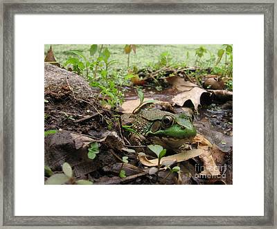 Frog In Swamp At Bowman's Hill Framed Print by Anna Lisa Yoder