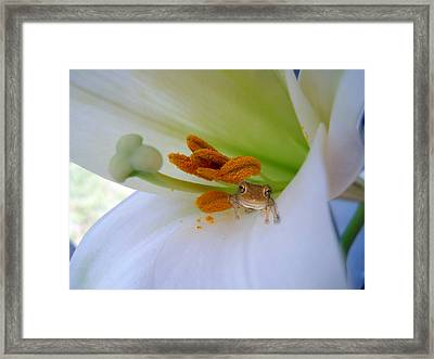 Frog In The Lily Framed Print by Judy Hall-Folde