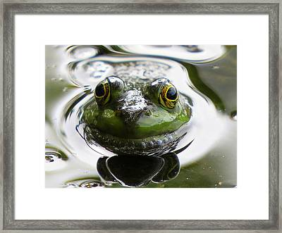Framed Print featuring the photograph Frog Kiss by Dianne Cowen