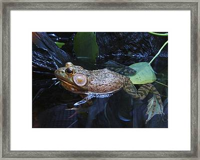 Framed Print featuring the photograph Frog Legs Did Someone Say Frog Legs by Rhonda McDougall
