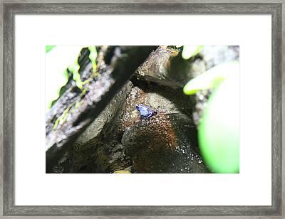 Frog - National Aquarium In Baltimore Md - 12122 Framed Print