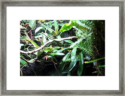 Frog - National Aquarium In Baltimore Md - 12123 Framed Print by DC Photographer
