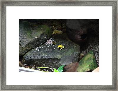 Frog - National Aquarium In Baltimore Md - 12125 Framed Print by DC Photographer