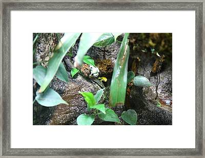 Frog - National Aquarium In Baltimore Md - 12126 Framed Print by DC Photographer
