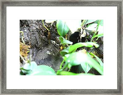 Frog - National Aquarium In Baltimore Md - 12127 Framed Print