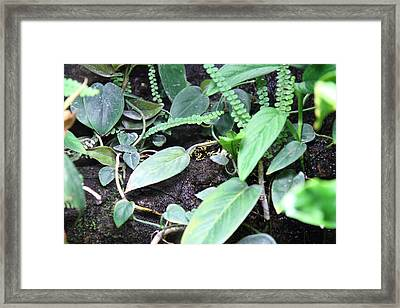 Frog - National Aquarium In Baltimore Md - 12128 Framed Print by DC Photographer