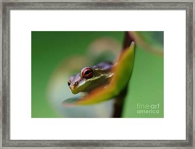 Frog On A Leaf Framed Print