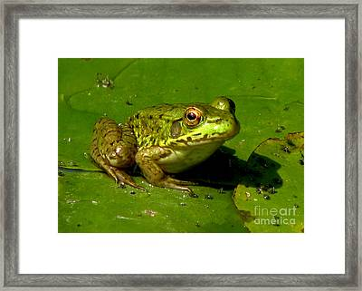 Frog On A Lily Pad Framed Print by Inspired Nature Photography Fine Art Photography