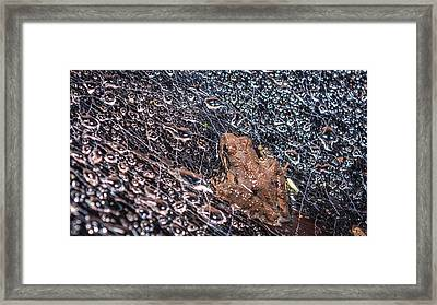 Framed Print featuring the photograph Frog On A Web by Rob Sellers