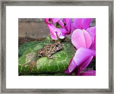 Frog On Cyclamen Plant Framed Print by Debra Thompson