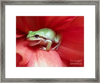 Frog On Dahlia Framed Print