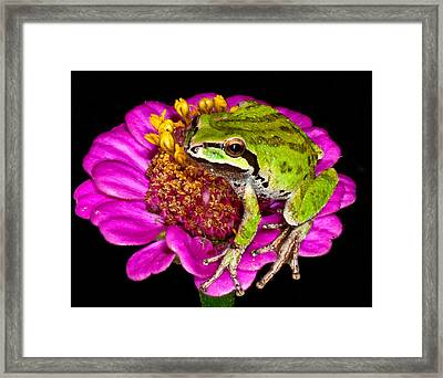 Frog  On Flower Framed Print by Jean Noren