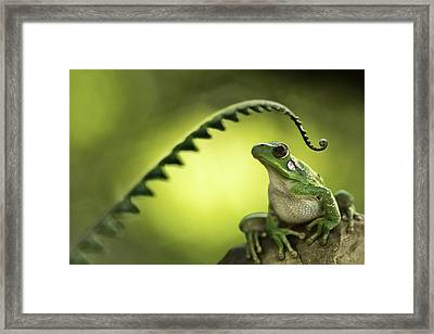 Frog On Green Background Framed Print