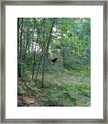 Frog On The Screen Framed Print by Susan Wyman