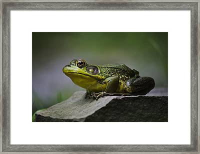 Frog Outcrop Framed Print by Christina Rollo