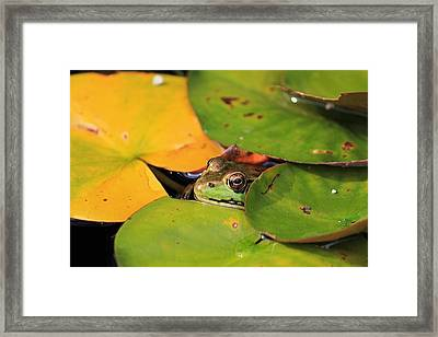 Frog Pond 3 Framed Print