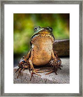 Frog Prince Or So He Thinks Framed Print by Bob Orsillo