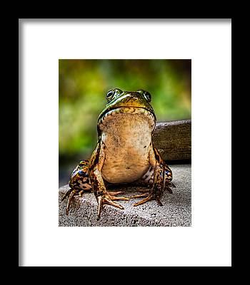 Bullfrogs Framed Prints