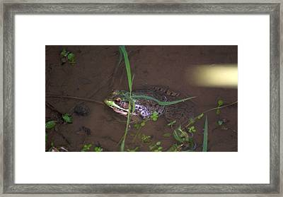 Frog Profile Framed Print by Rob Luzier