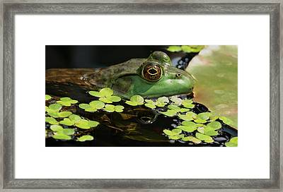 Frog Reflection Framed Print by Barbara S Nickerson
