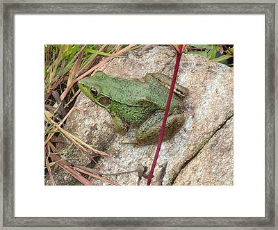 Frog Framed Print by Robert Nickologianis