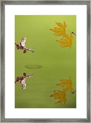 Frog Framed Print by Sharon Lisa Clarke